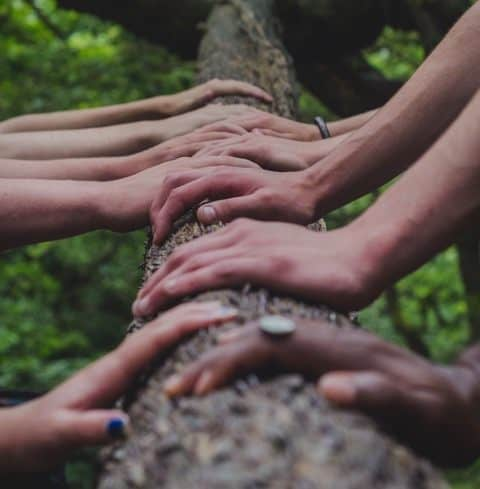 Hands of a group of people are placed on a log.