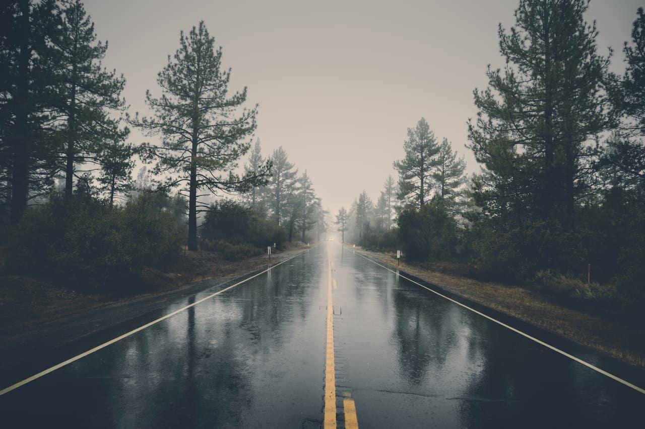 An empty road running through a forest.