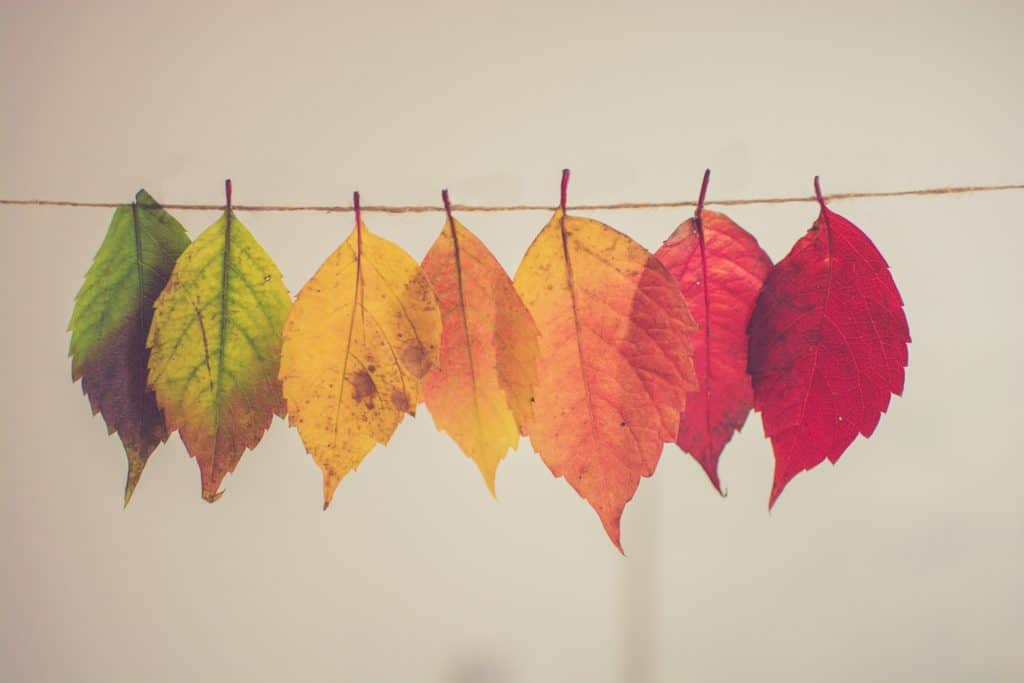 Different-colored leaves hang on a string.